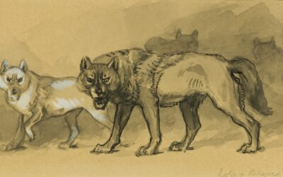 Lobo, Life and Death of a Gray Wolf