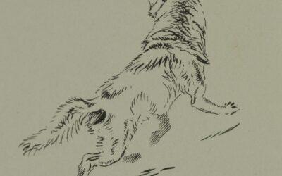 Hunt for Lobo Part II