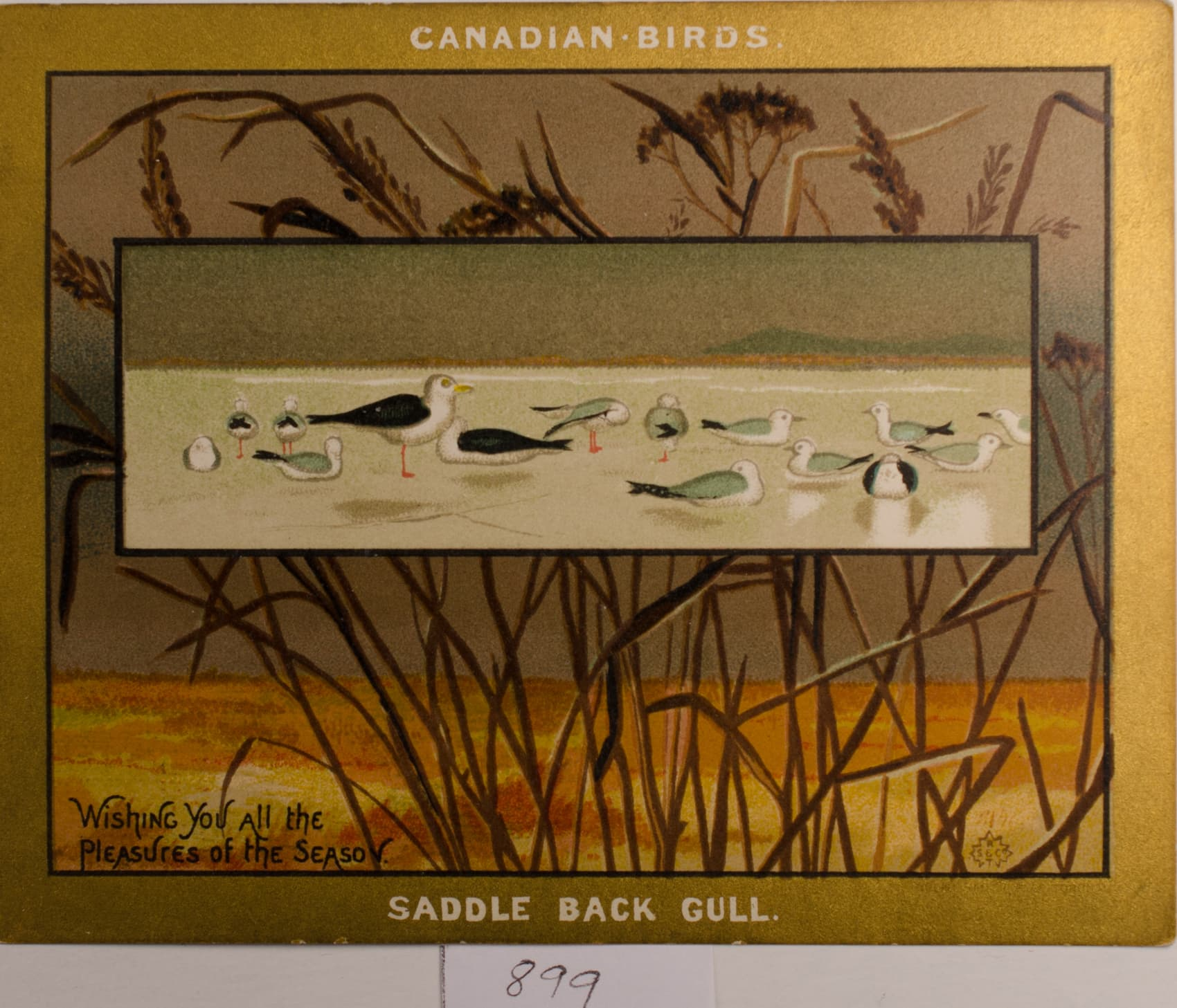 The Birds of Canada Seton Biography 1870s
