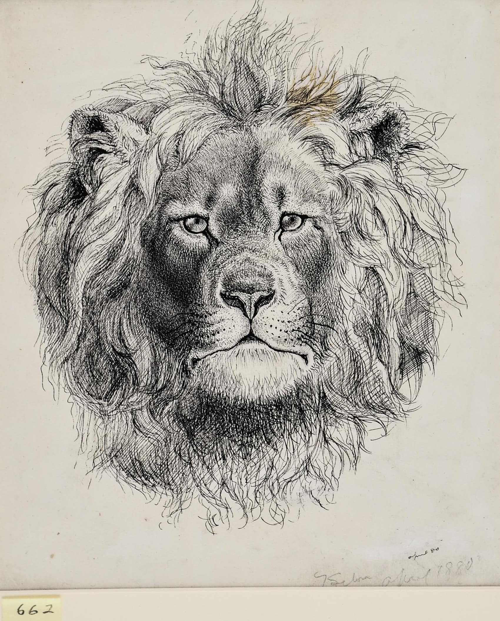 Lion Portraits