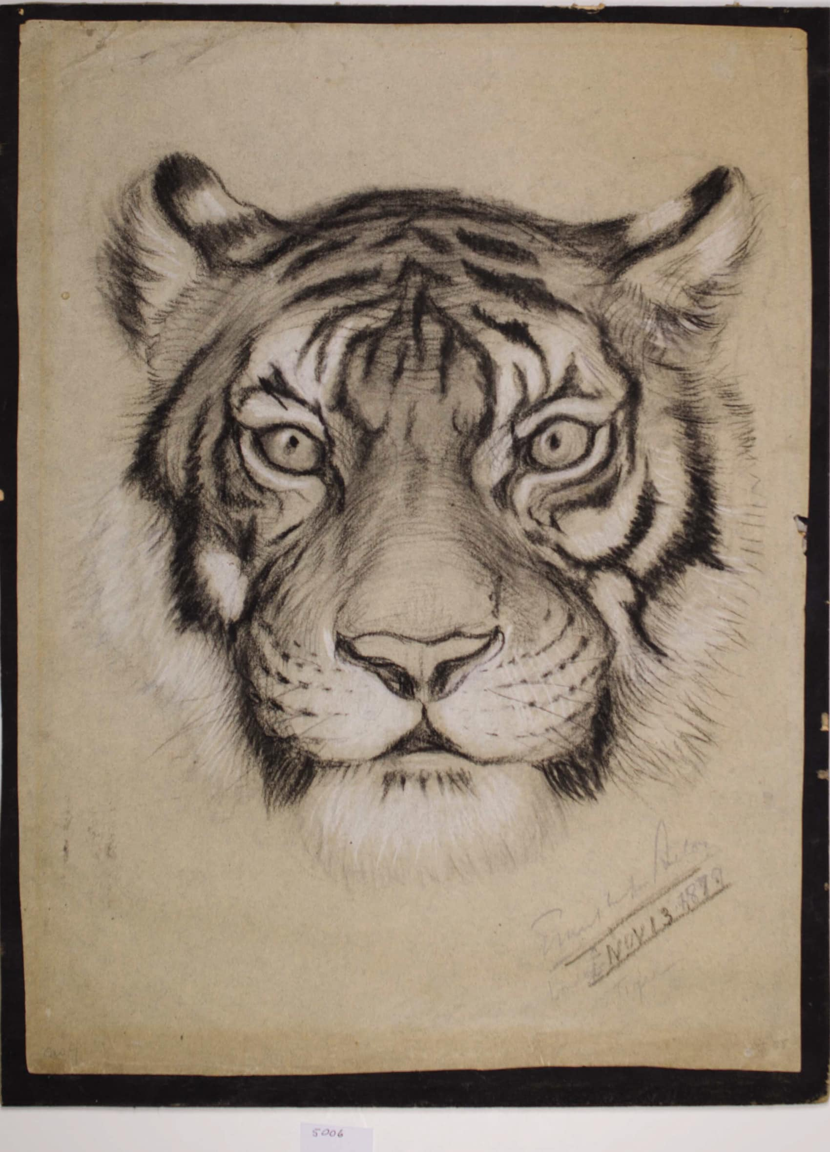 Tiger Portraits
