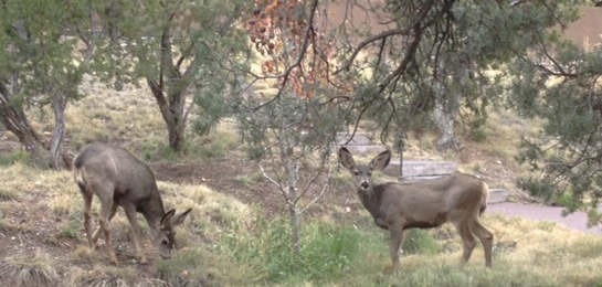 Mule Deer Visit Academy for the Love of Learning