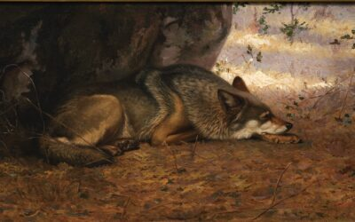 The Sleeping Wolf by Ernest Thompson Seton