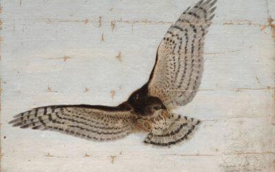 Sharp-shinned Hawk painting by Ernest Thompson Seton
