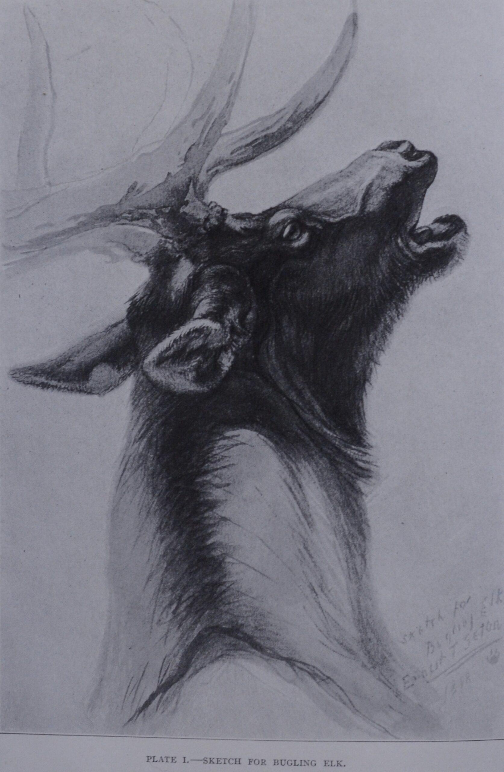 Elk Notes by Seton